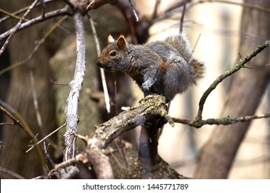 A photo of an Eastern Gray Squirrel that I keep seeing off of my back porch downtown. Notice that even though the photo was taken in the city, the entire image manages to consist entirely of the wild.