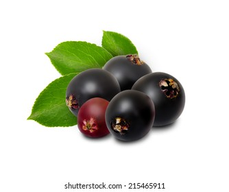 Photo of elderberries isolated on white