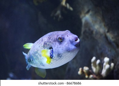 Photo of exotic colorful fish
