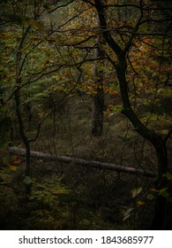 photo of fallen tree in the forest - Shutterstock ID 1843685977