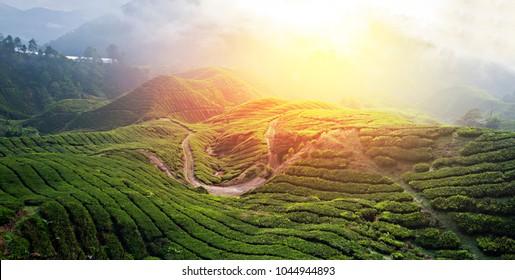 photo of famous fields of green tea plantation in Asia, Ceylon