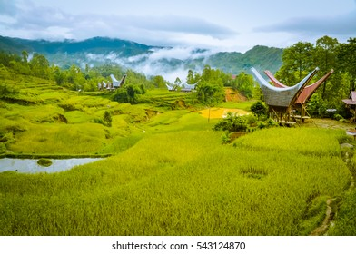 Photo of fields of grass and morning fog in forest near village with traditional tongkonans in Toraja region in Sulawesi, Indonesia.