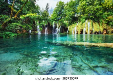 A photo of fishes swimming in a lake, taken in the national park Plitvice Croatia