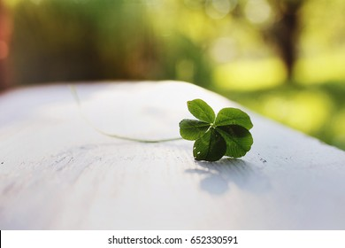 Photo Of Five Leaf Clover On The Sunny Day Is Luckiest As