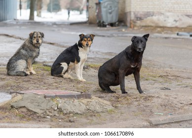 Photo of flock sad homeless dogs on a cold spring afternoon