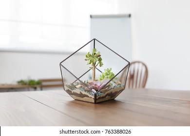 Photo of florarium with stones succulents