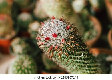 Photo of flowering cactus ors suculent
