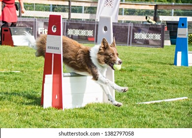 Photo from Flyball schampionship in Pesopark in Prague. It was amazing experience. They was really good and fast!