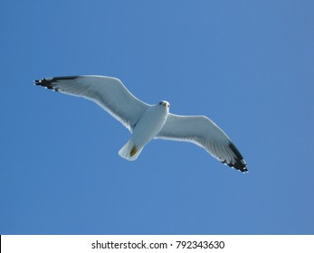 Photo from flying sea gull in deep blue sky
