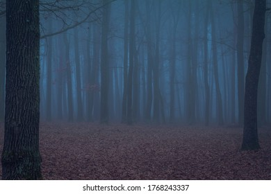 Photo of a foggy morning in forest - Shutterstock ID 1768243337