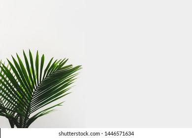 photo of foliage on white background