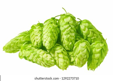 photo of a fresh green hops on a white background
