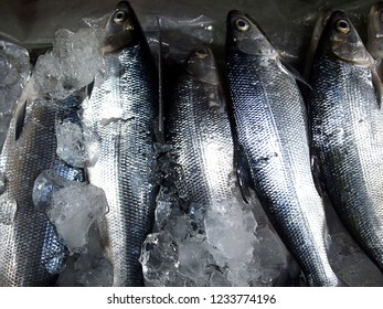 Photo of fresh milkfish or bangus in containers at a wet market
