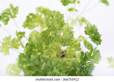 In the photo fresh parsley in a pot.