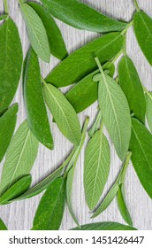 Photo of fresh sage. Concept of organic food.