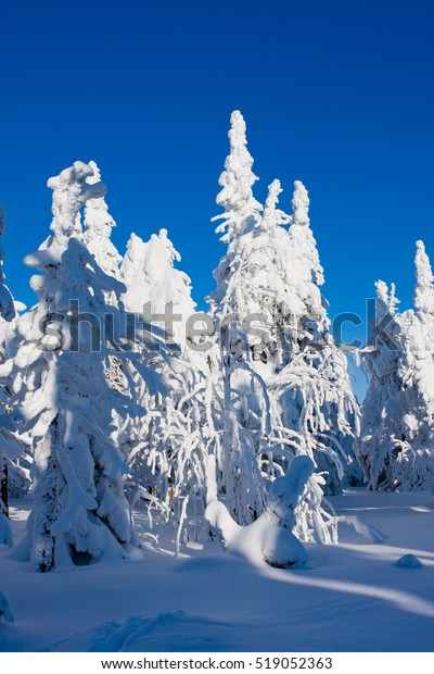Photo of frost nature with flock cold snow