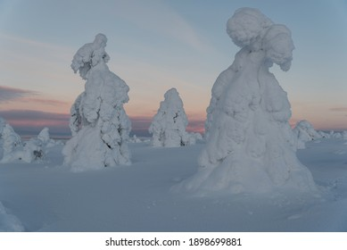 Photo of frozen, snow-covered trees