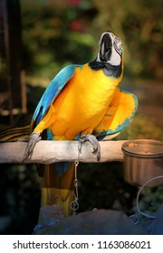 Photo funny of a bright macro parrot in a tropical jungle