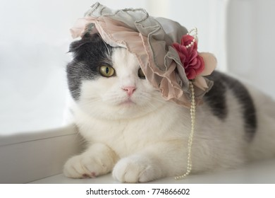 Photo of a funny cat in a lady's hat