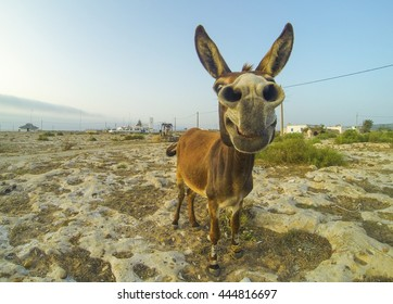 Photo of the funny donkey in desert of Morocco