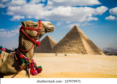 A photo of the Giza Pyramids outside of Cairo, Egypt.  An iconic image of ancient times and places.  Title: Camel of Giza