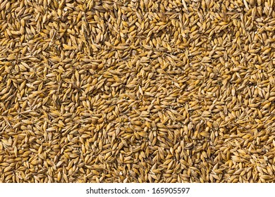 photo with gold wheat corn seamless background