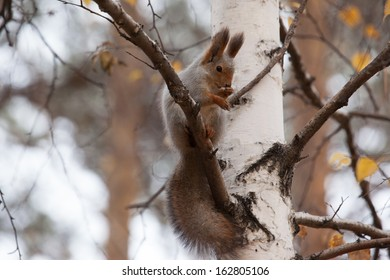 photo of gray squirrel sitting on the birch