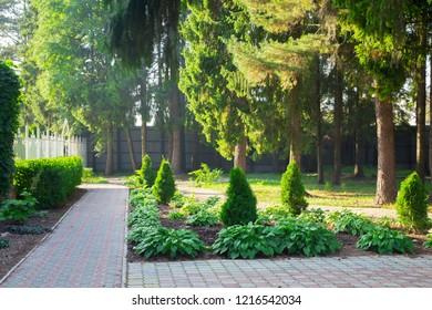 Photo of the green backyard among trees