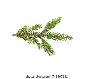 photo of green Christmas fir-tree branches on white isolated background