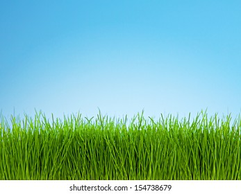 Photo of green grass against bright blue sky.