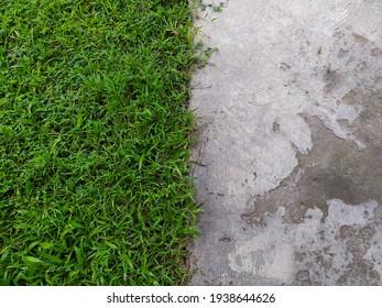 photo of green grass and concrete,looks unique.