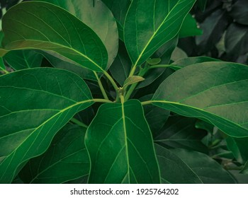 photo of green leaf with soft and smooth texture