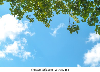 Photo of green leaves against clouds