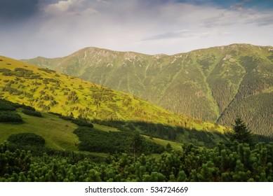 Photo of greenery and mountains near Cutkovska dolina in Ruzomberok, Slovak Republic. - Shutterstock ID 534724669