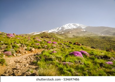 Photo of greenery and purple flowers surrounding Mount Damavand, stratovolcano and highest peak in Iran.