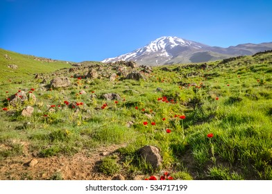Photo of greenery with red poppy flowers with Mount Damavand, stratovolcano and highest peak in Iran in distance.