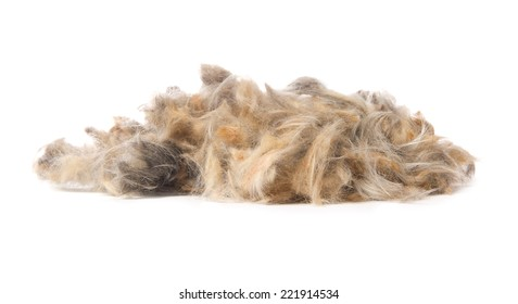 Photo of hair heap isolated on white