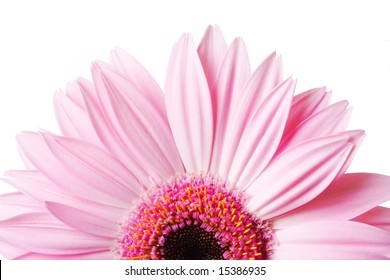 Photo of half of Gerbera daisy  isolated on the white background