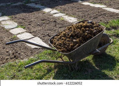 Photo of horse manure on garden