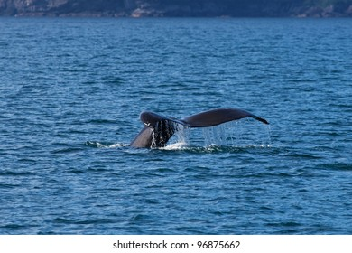 A photo of a humpback whale tail