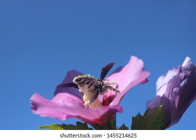 photo image of bee gathering pollen in the flowers