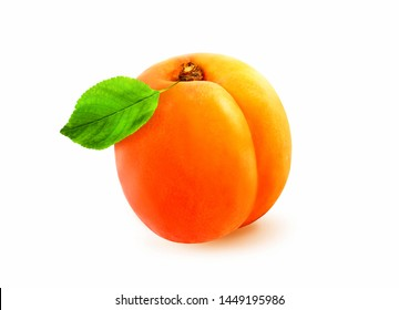 Photo of isolated apricot with leaf on white background