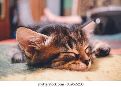 photo kitten sleep