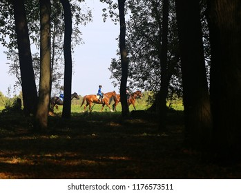 Photo landscape of a dark park and riders on horseback