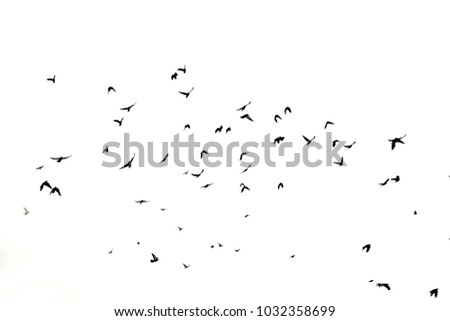 Photo of a large flock of black birds in the sky