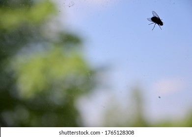 Photo of a large fly on a window pane with beautiful bokeh.