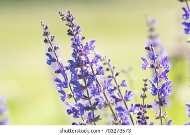A photo of lavender flowers on a field. Selective focus.