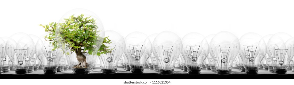 Photo of light bulbs in rows with tree on white background; concept of ecology, power saving, standing out, uniqueness and innovation
