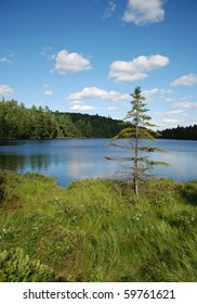 Photo of lonely fir-tree on a lake, Algonquin Provincial Park, Ontario, Canada