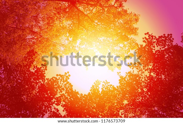 Photo of a macro background of the sky with trees view to the top
